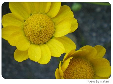 20080409-花