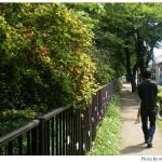 【京都→東京】子連れ旅行(帰省)3日目「江戸東京たてもの園」に行く編(1)