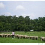 【京都→岩手】子連れ旅行4日目:小岩井農場まきば園・小岩井工場・上丸牛舎・盛岡