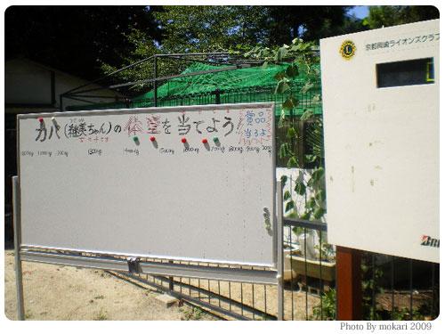 20090915-6 京都市動物園の「カバさんの体重測定」に参加して。