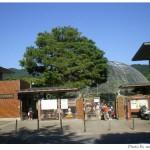 京都市動物園に行きました(2009年夏)