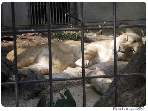 20090922-4 京都市動物園でスタンプラリー(娘が)