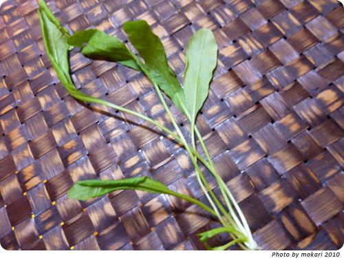 20100108-2 JA西条、春の七草。しまった、七草粥を夕飯に食べる。  なずな?ほとけのざ?