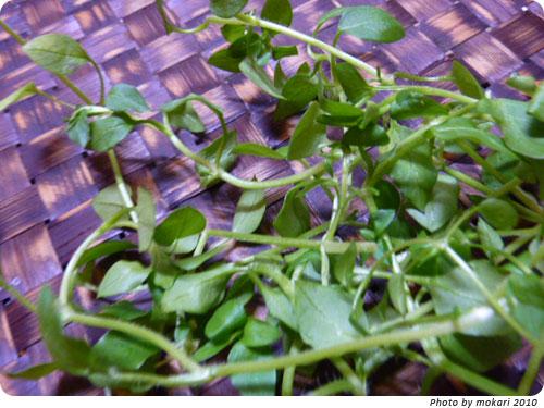 20100108-3 JA西条、春の七草。しまった、七草粥を夕飯に食べる。 はこべら