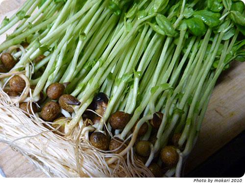 豆苗を再収穫する方法