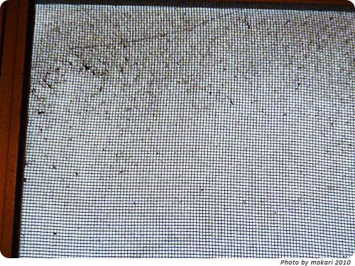 20101222-3 深刻な網戸。あみ戸びっクリーンでやばい網戸の掃除に成功