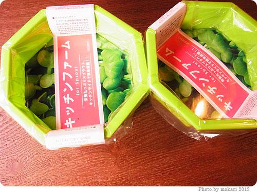 201200421-1 スプラウト栽培セットを買ってみました(豆苗、グリーンマッペなど)