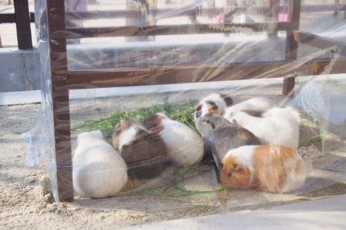 P1114039 京都市動物園