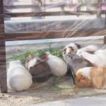 京都市動物園リニューアル中、もうじゅうワールドとおとぎの国(2015年1月)