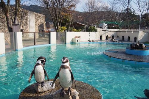P1114061 おとぎの国 ペンギン