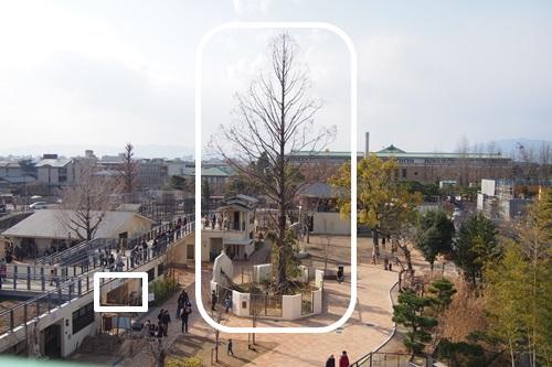 P1114078 京都市動物園のレッサーパンダ舎