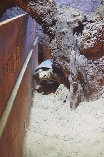 P1114102 熱帯動物園