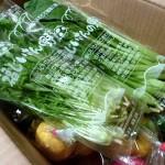 九州の野菜を取り寄せられる通販サイト、やお九州の野菜