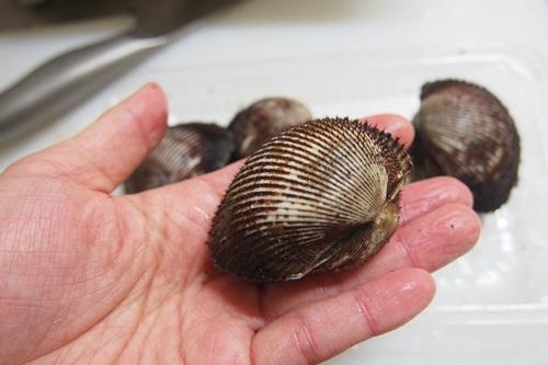 P2014626 赤貝を捌いた