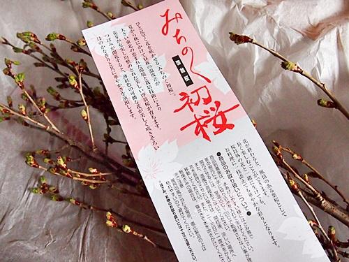 P3053554 桜の枝「みちのく初桜」が贈られてきた。冬から春にかけての贈り物に