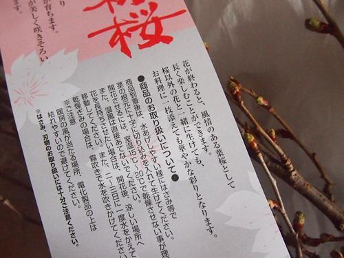 P3053556 桜の枝「みちのく初桜」が贈られてきた。冬から春にかけての贈り物に