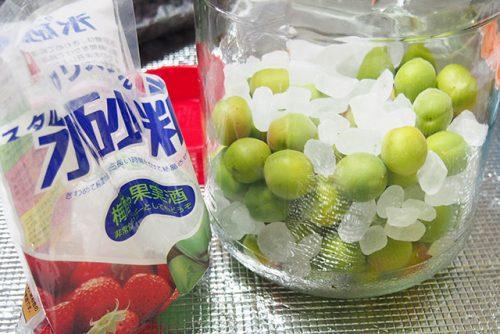 梅と氷砂糖を果実酒びんに入れる