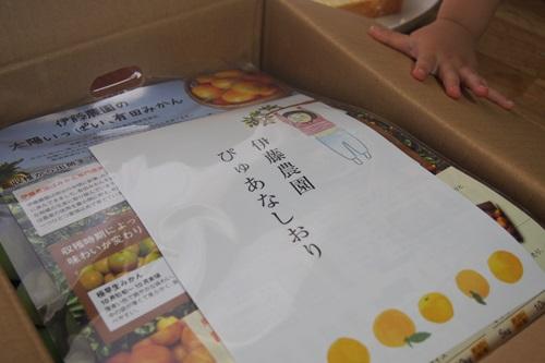 P6246394 通販で青梅3キロお取り寄せ(伊藤農園)