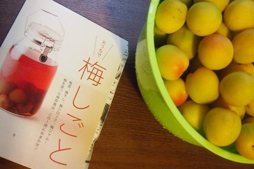 P6263336 梅を梅ジュースと梅干に(2014年梅しごと)