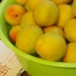 梅を梅ジュースと梅干に(2014年梅しごと)