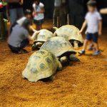 京都水族館では夏限定で「ゾウガメ」が見られて最高
