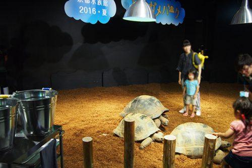 京都水族館でゾウガメ