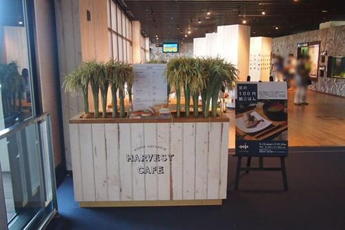 P7280389 京都水族館で食べたもの