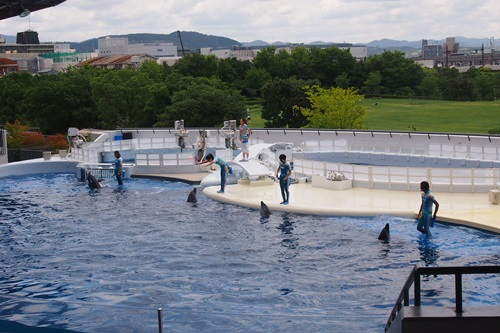 P728042 京都水族館のイルカショー