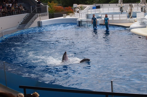 P7280432 京都水族館のイルカショー