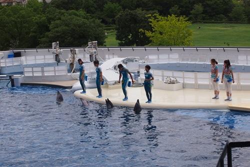 P7280434 京都水族館のイルカショー