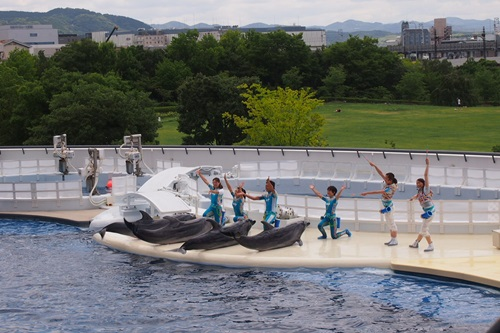 P7280438 京都水族館のイルカショー