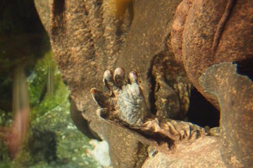 P7280483 京都水族館で見た気になる生き物!