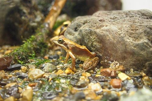 P7280494 京都水族館で見た気になる生き物