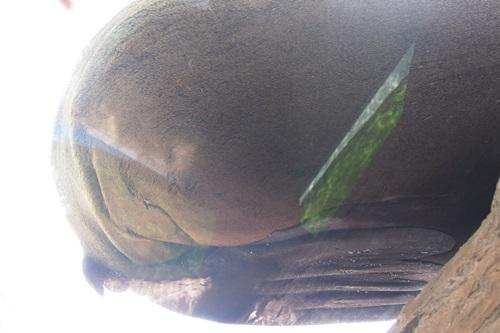 P7280500 京都水族館で見た気になる生き物