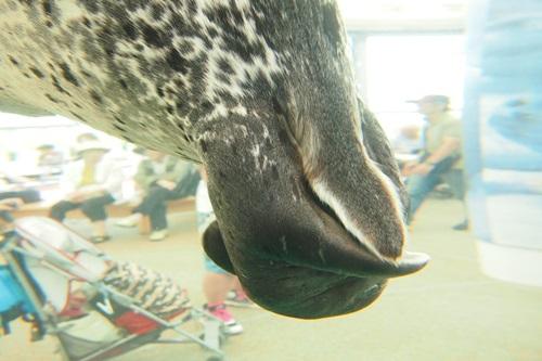P7280501 京都水族館で見た気になる生き物