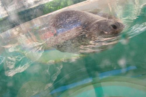 P7280504 京都水族館で見た気になる生き物