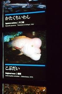 P7280544 京都水族館で見た気になる生き物