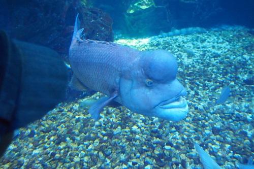 P7280547 京都水族館で見た気になる生き物