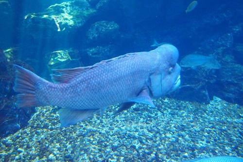P7280548 京都水族館で見た気になる生き物