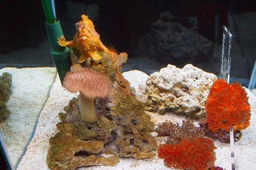 P728061 京都水族館で見た気になる生き物