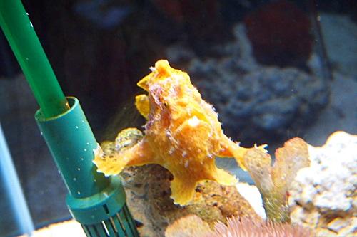 P7280616 京都水族館で見た気になる生き物