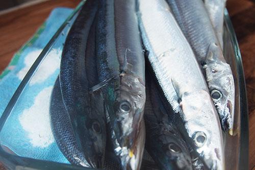 秋刀魚の通販