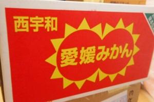 PC043446 愛媛県西宇和地区のみかん