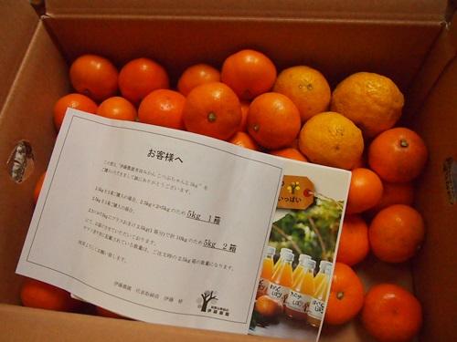 PC130039 楽天でみかん箱買い3箱目は、和歌山伊藤農園のこつぶちゃん♪