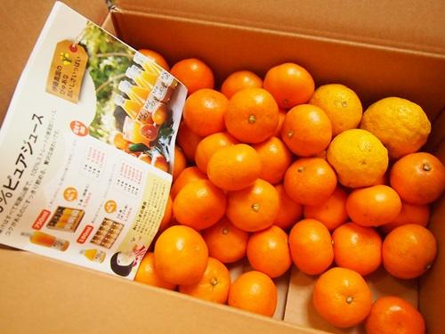 PC130041 楽天でみかん箱買い3箱目は、和歌山伊藤農園のこつぶちゃん♪