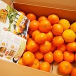 楽天でみかん箱買い3箱目は、和歌山伊藤農園のこつぶちゃん♪