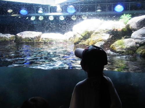 R1156213 はじめての、神奈川「新江ノ島水族館」