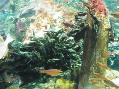 R1156225 はじめての、神奈川「新江ノ島水族館」