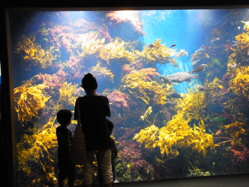 R1156254 はじめての、神奈川「新江ノ島水族館」