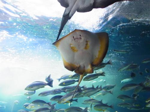 R1156290 はじめての、神奈川「新江ノ島水族館」 子どもと楽しむ編